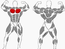 Brust Übungen