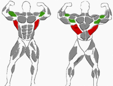 Hantelübung für den Rücken