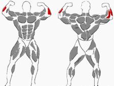Hantelübungen äußerer Unterarmmuskel
