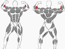 Hantelübungen innerer Unterarm