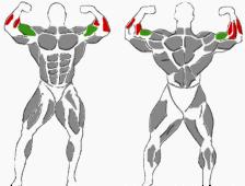 Kurzhantelübung für die Unterarme