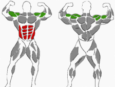 Gesamte Bauchmuskulatur_Schultern-Bizeps-Trizeps