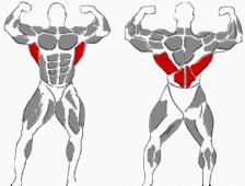Rücken Übungen