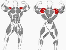 Schultern Übungen