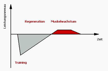 Superkompensation - Muskelaufbau