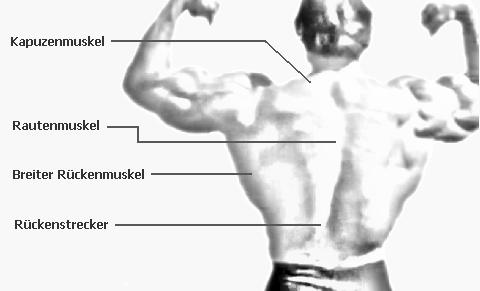 Breiter Rücken durch Hanteltraining | Hanteltraining