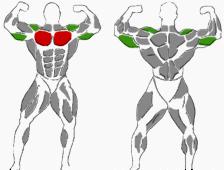 Hanteltraining Übungen für die Brust