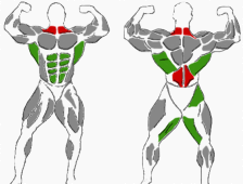 Hanteltraining Übungen für den Rücken