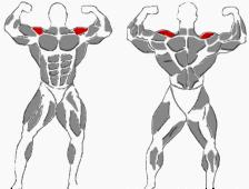 Schultern mit Langhantel trainieren