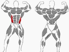 Hantelübung für den Bauch