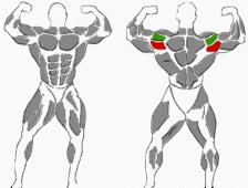 Schultertraining, hintere Schultermuskeln